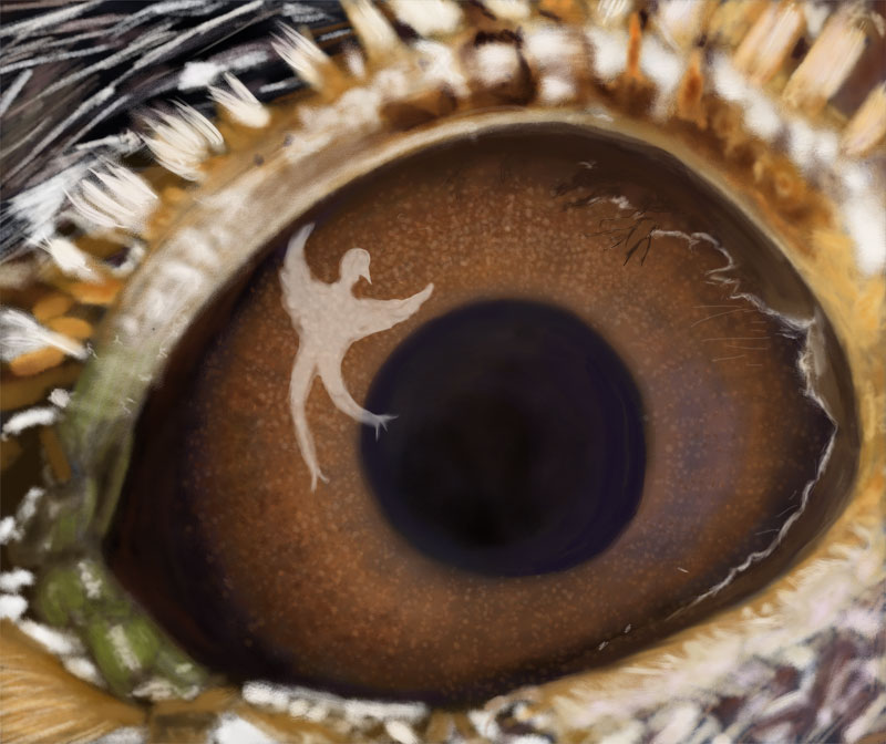 A larks eye reflects a spirit dancer.