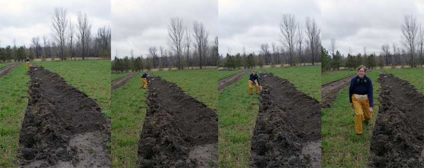 "The hops row. Another job for the ""genius 8"" and my tractor. And Ms. M lends a hand too."