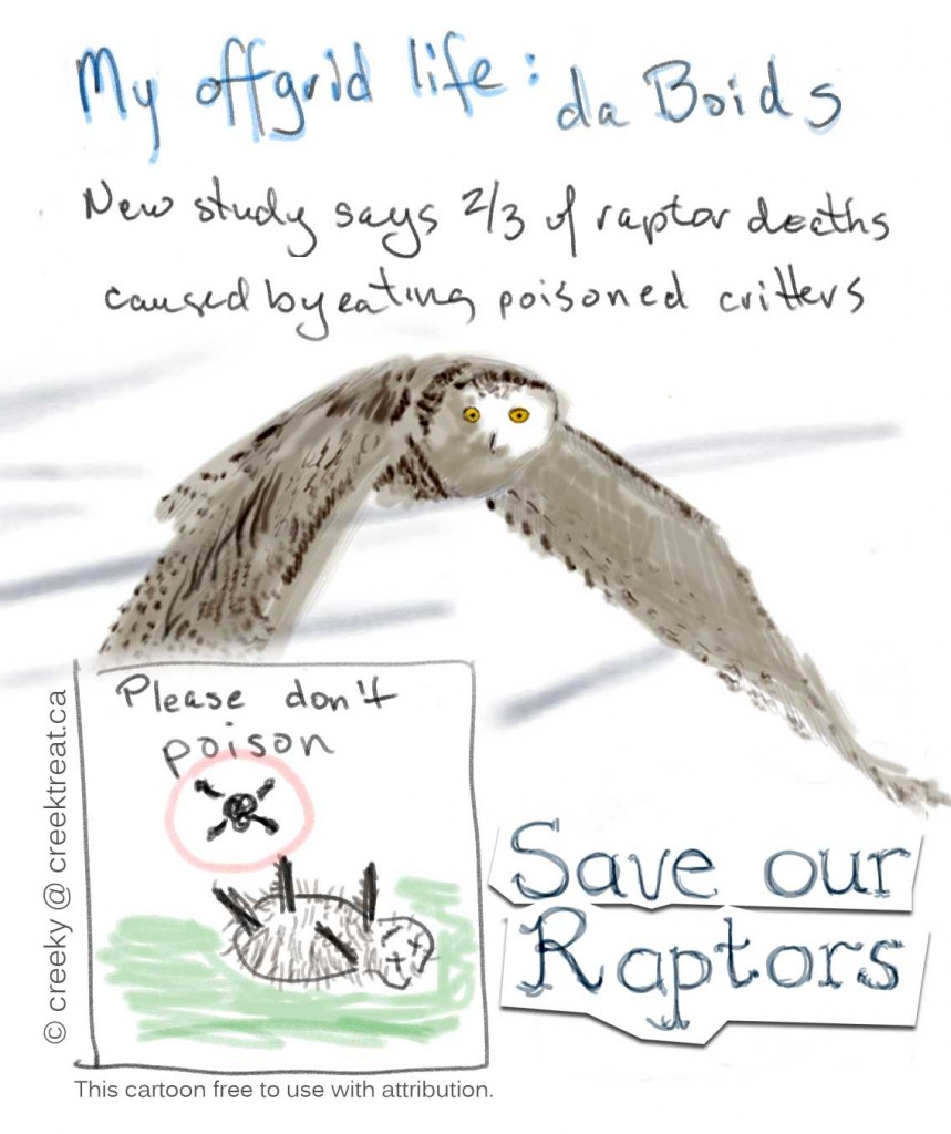 Save our Raptors. Don't poison critters.