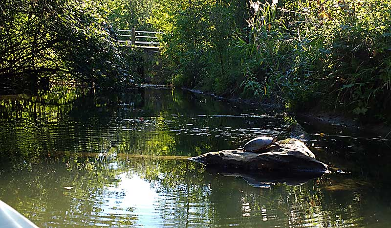 Approaching said turtle.